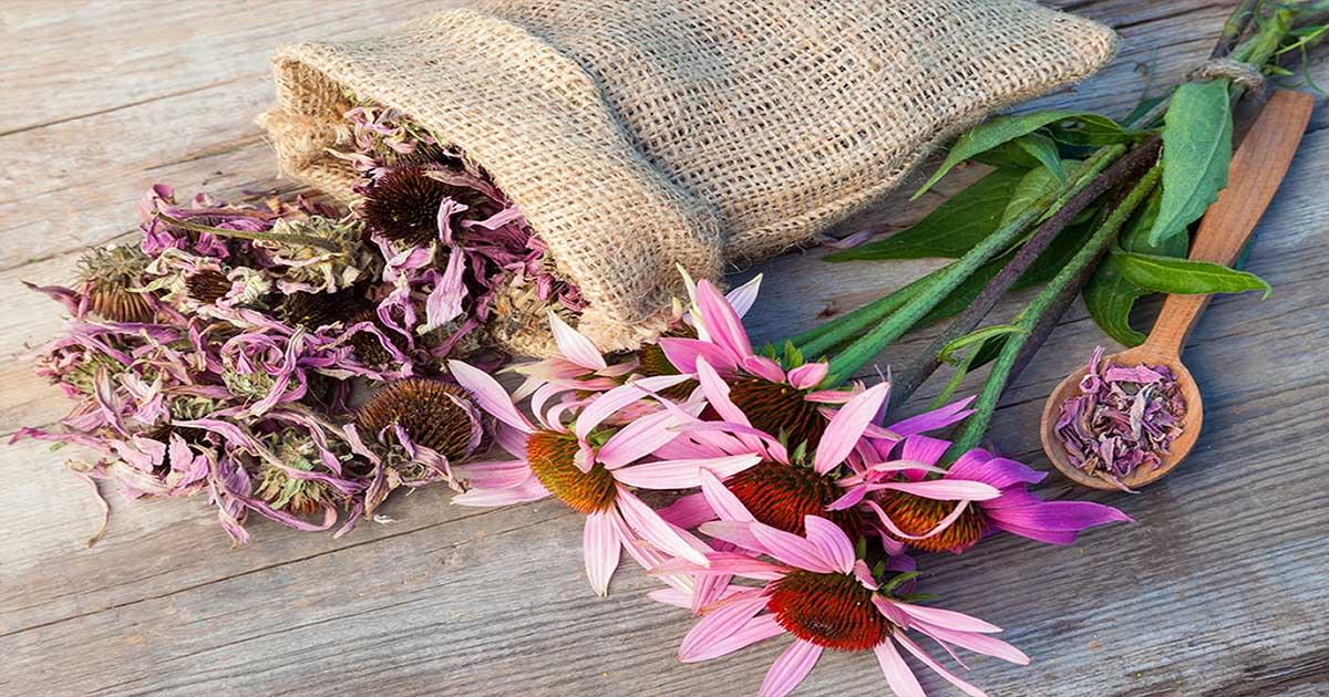 Aromaterapija kao pomoć u liječenju vaginalnih infekcija
