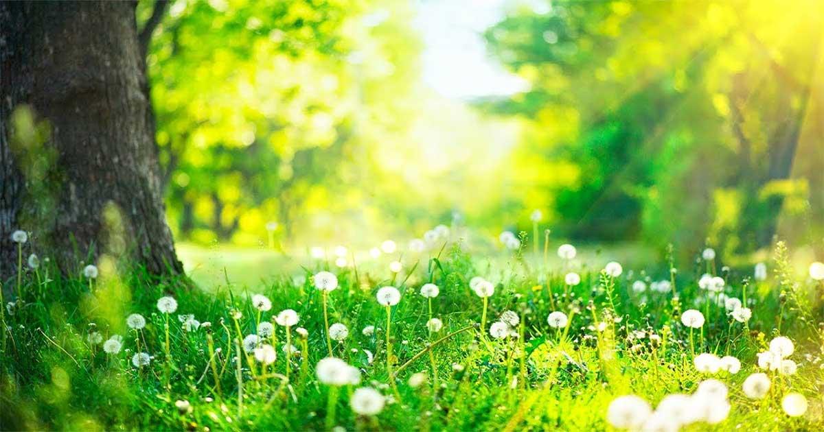 Priroda - meditacije i esencijalna ulja protiv stresa i straha