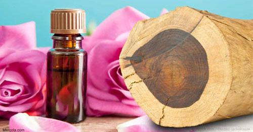 Vođena meditacija s esencijalnim uljem ružinog drveta