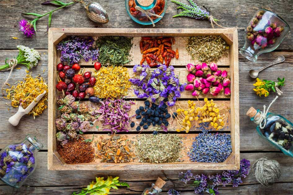 fitoterapija - biljke