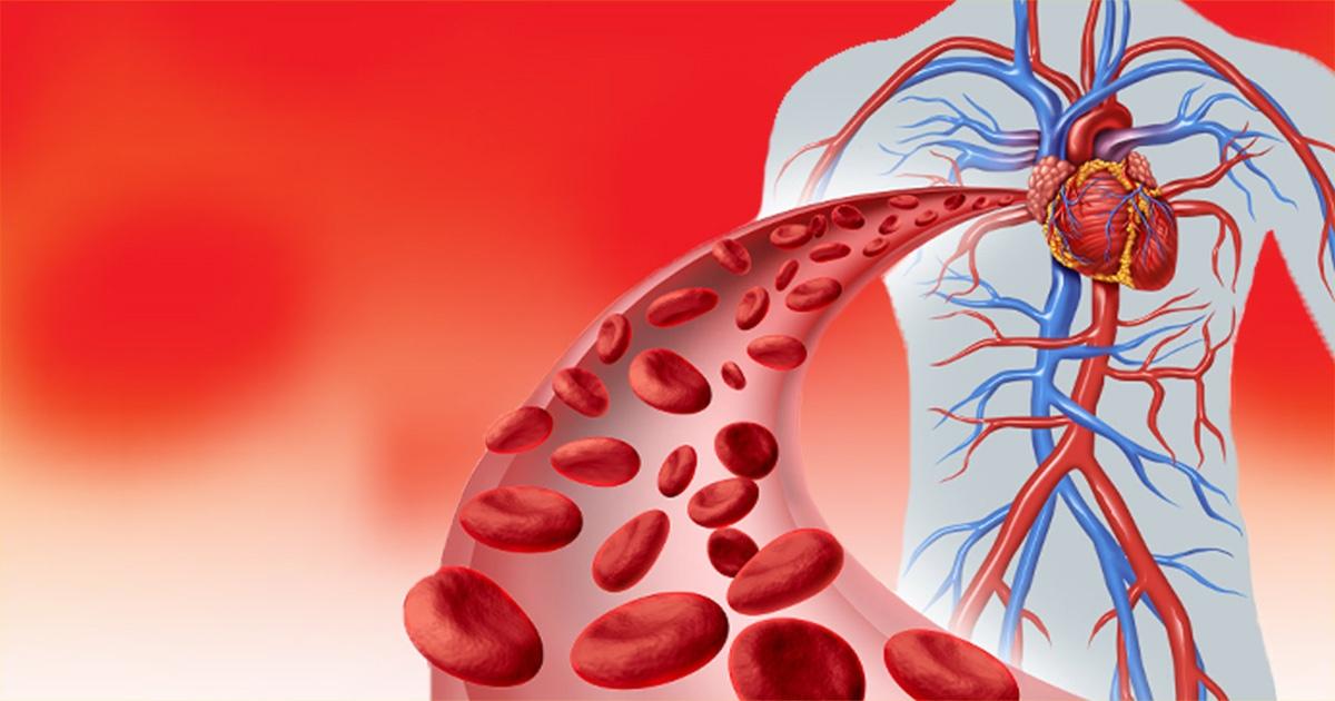 Primjena biljnih pripravaka kod bolesti krvožilnog sustava